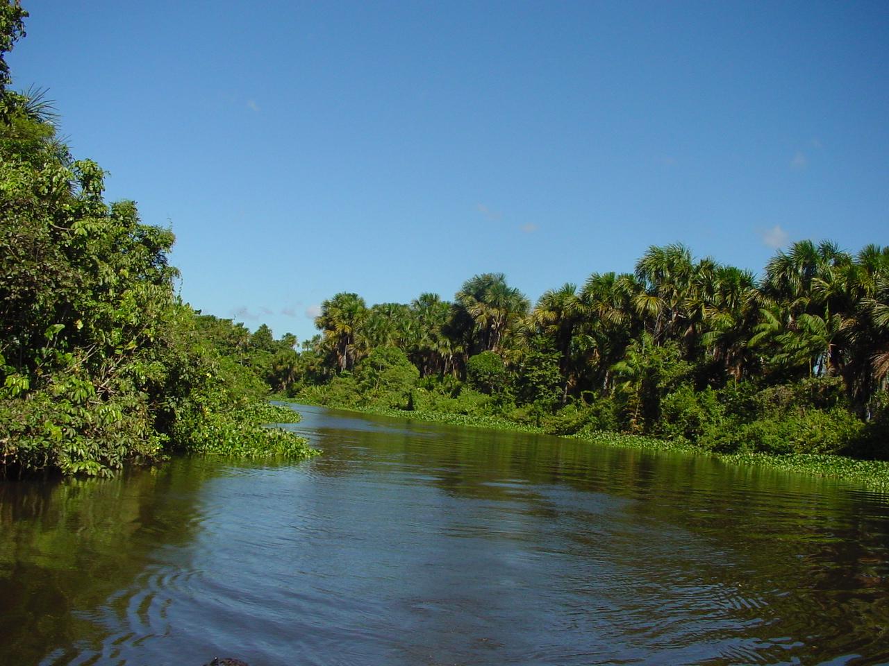 Orinoco River Cacao Travel Gr...