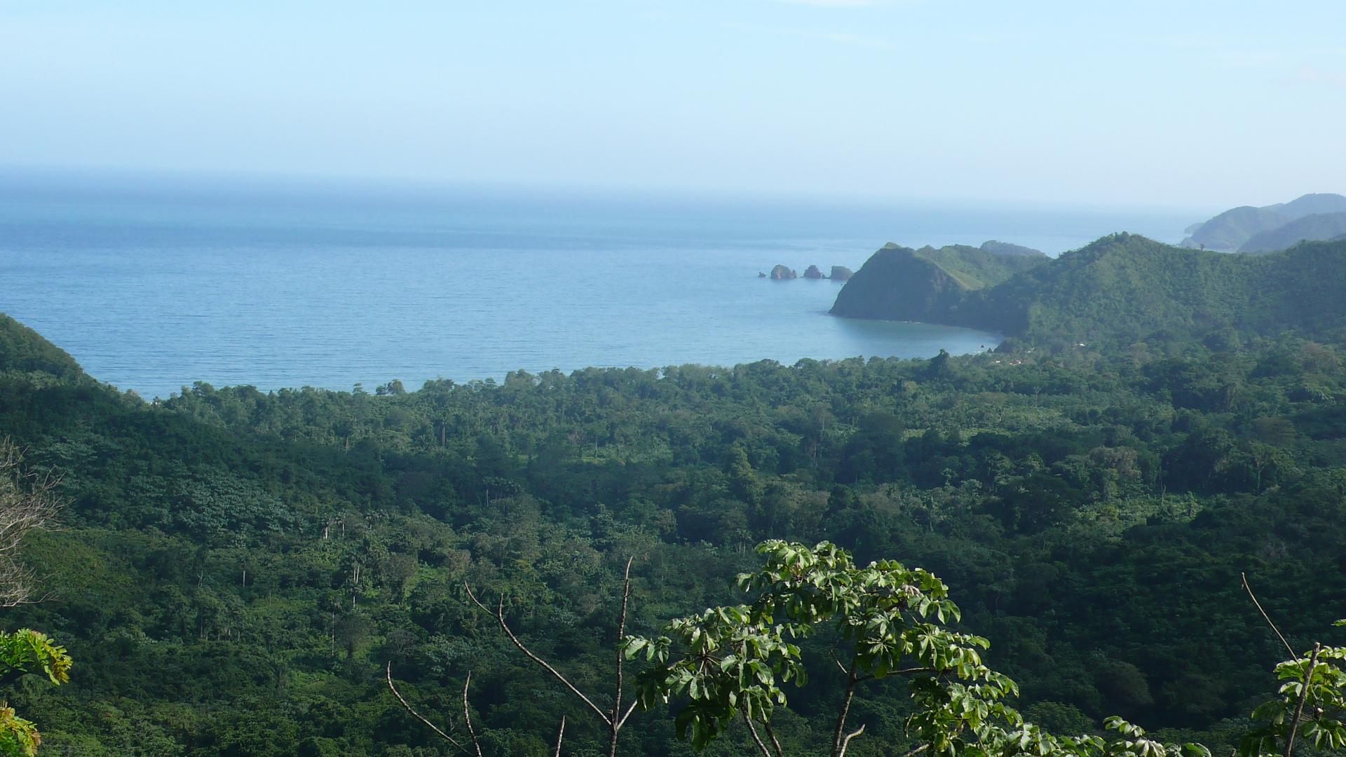 Image result for The forests of Venezuela.